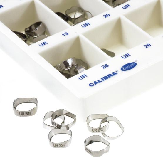 Leone banda calibra molares